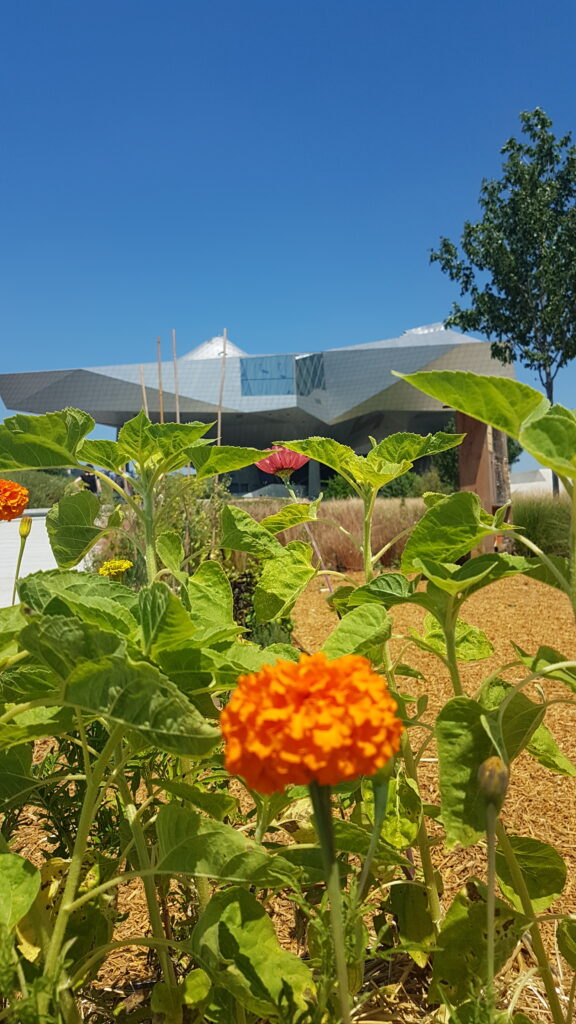musée-des-confluences-nuage-jardin-coop-himmelblau